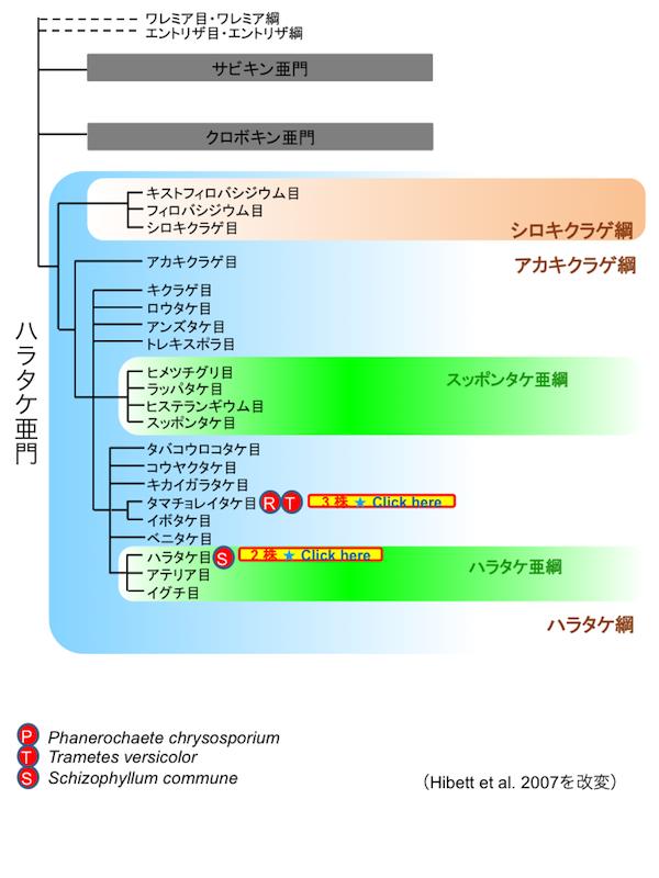 モデル菌株類縁菌 | バイオテク...
