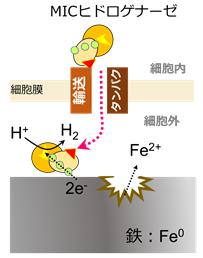 図2 メタン生成菌による鉄腐食機構