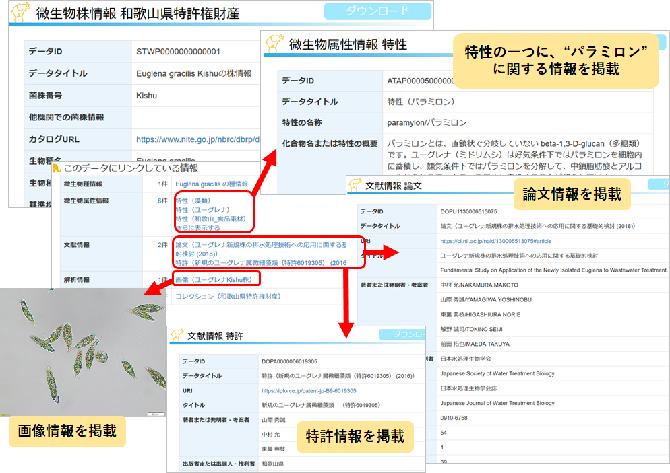 和歌山県特許権財産